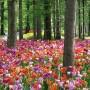 Arboretum8