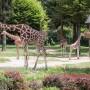 Zoo-Ljubljana22