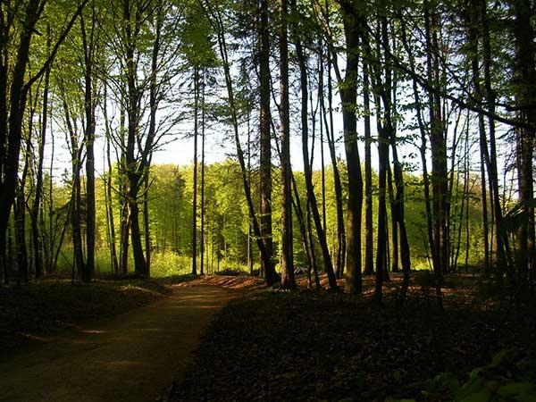 gozd bioles